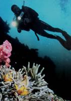 Jez coral